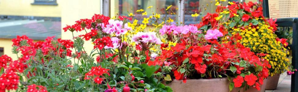 lucanlodge-nursing-home-outdoors-flowers